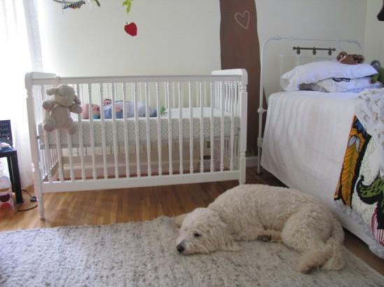 Dog guarding baby